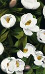 Florida Magnolia Flowers