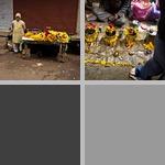 Florists photographs