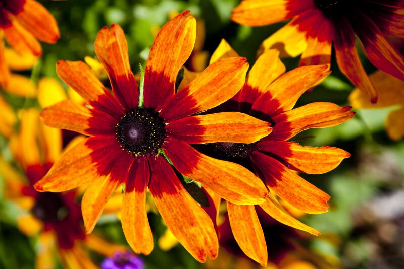 Flower at the Munich Old Botanical Garden