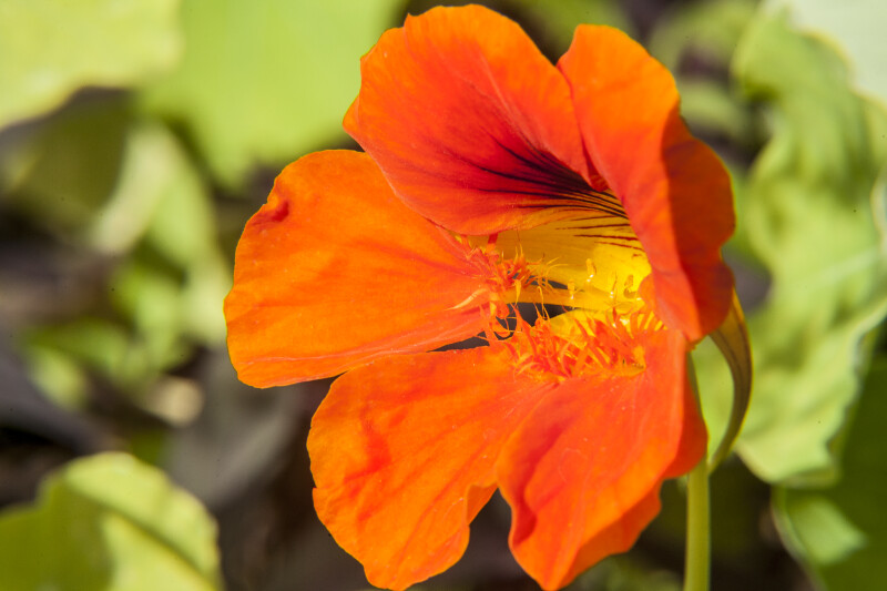 Flower with Deep Orange and Yellow Colors