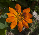 Flower with Orange Petals at The Fruit and Spice Park
