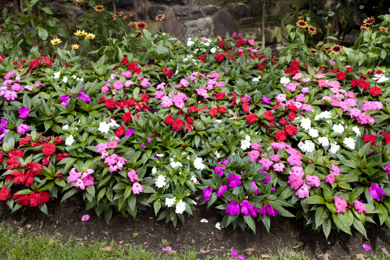 Flowerbed at Kennywood
