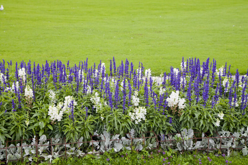 Flowerbed at Nymphenburg