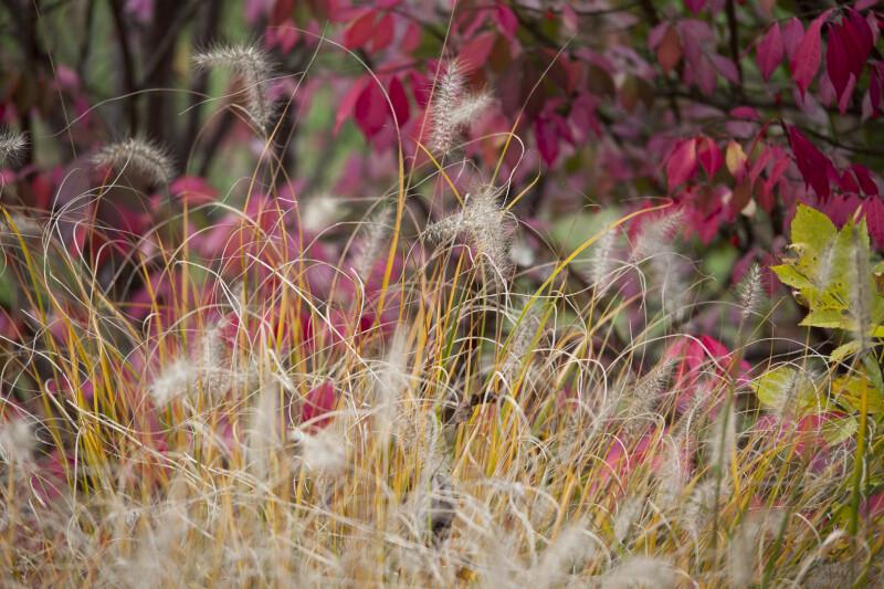 Flowering Grass