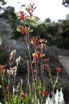 Flowering Herbaceous Plant