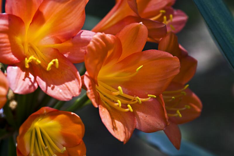 Flowers at Botanical Gardens