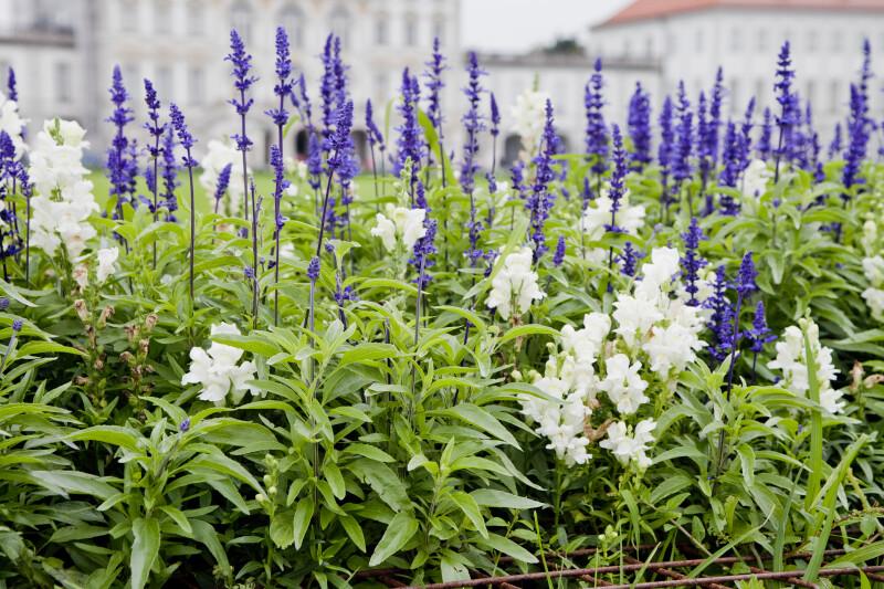 Flowers at Nymphenburg