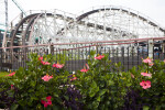 Flowers by Roller Coaster