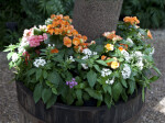 Flowers in Planter