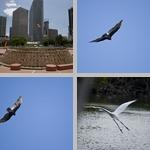 Flying photographs
