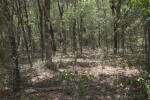 Forest at Chinsegut Wildlife and Environmental Area