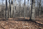 Forest of Bare Trees at Boyce Park