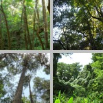 Forests photographs