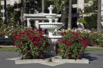Fountain Next to Two Rose Bushes
