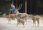 Four Chital at the Artis Royal Zoo