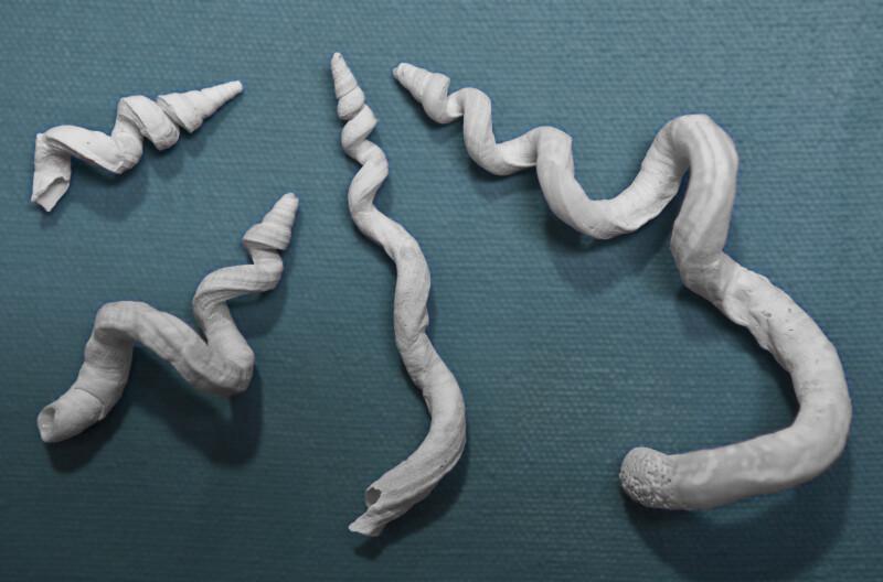 Four Worm Shells