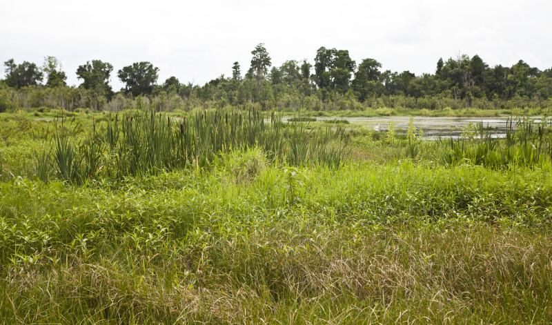 Freshwater marsh at Circle B Bar Reserve