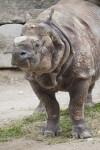 Front Left Side of Indian Rhinoceros