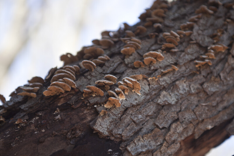 Fungi Growing on Tree Bark