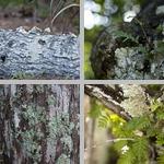 Fungi photographs