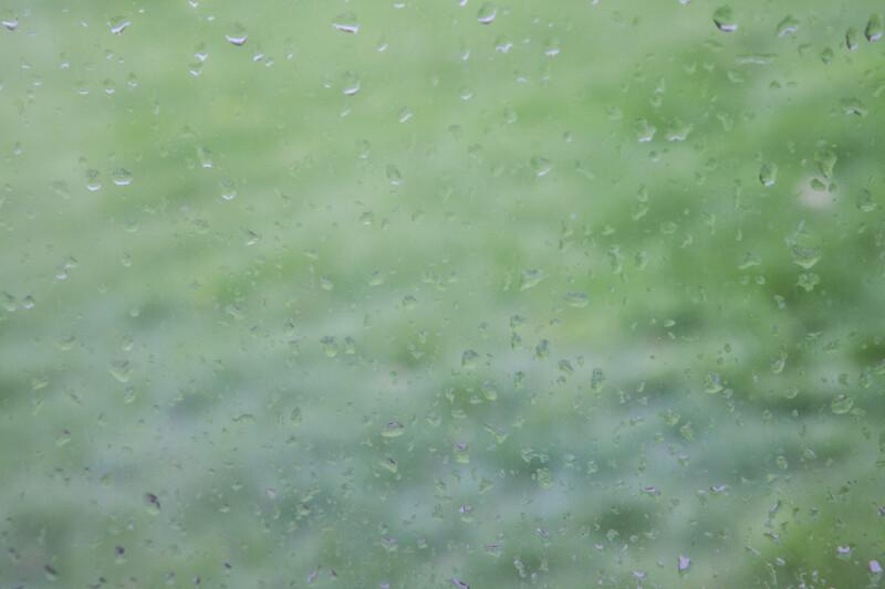 Garden Seen Through a Window on a Rainy Day