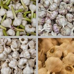 Garlic photographs