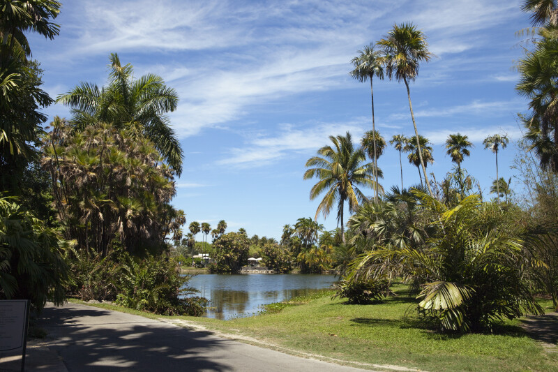 General View of Palms