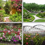 General Views of Flower Gardens photographs