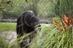 Giant Anteater and Bush