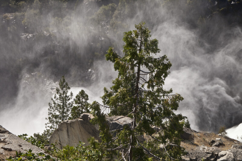 Granite and Pine Trees above the Tuolumne River