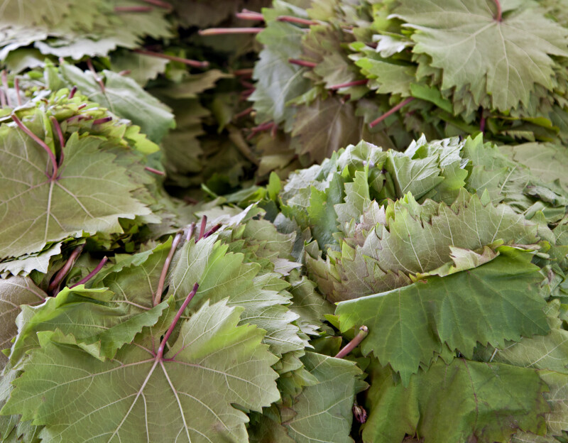 Grape Leaves on Display
