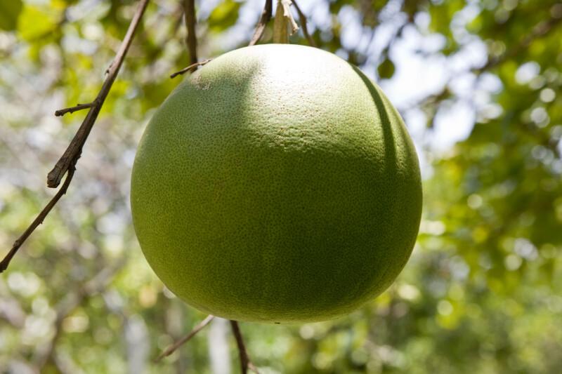 Grapefruit Detail