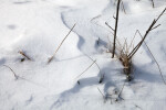 Grass and Twigs in the Snow