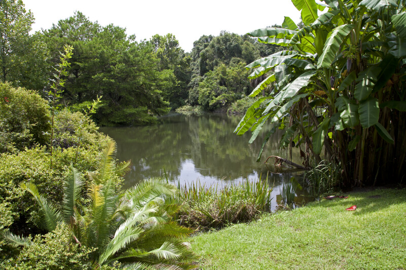 Grass Area Leading To A Pond At The Kanapaha Botanical
