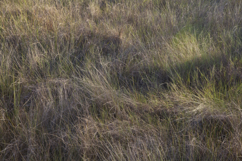 Grass at Kirby Storter Park of Big Cypress National Preserve