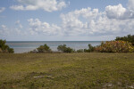 Grass Field Leading to the Ocean at Biscayne National Park
