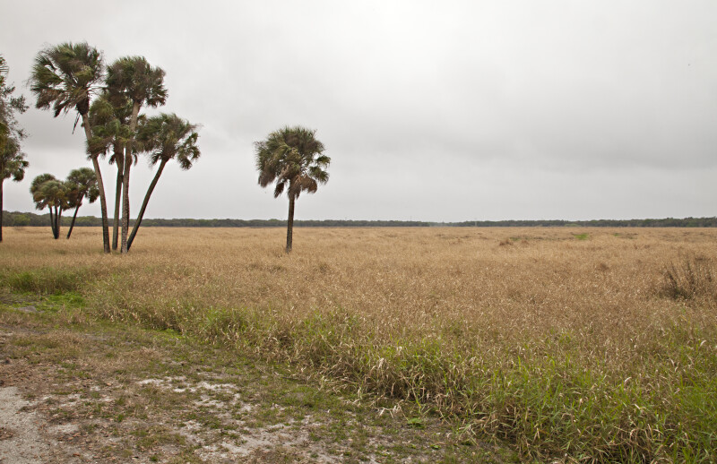 Grass Field on a Gloomy Day at Myakka River State Park