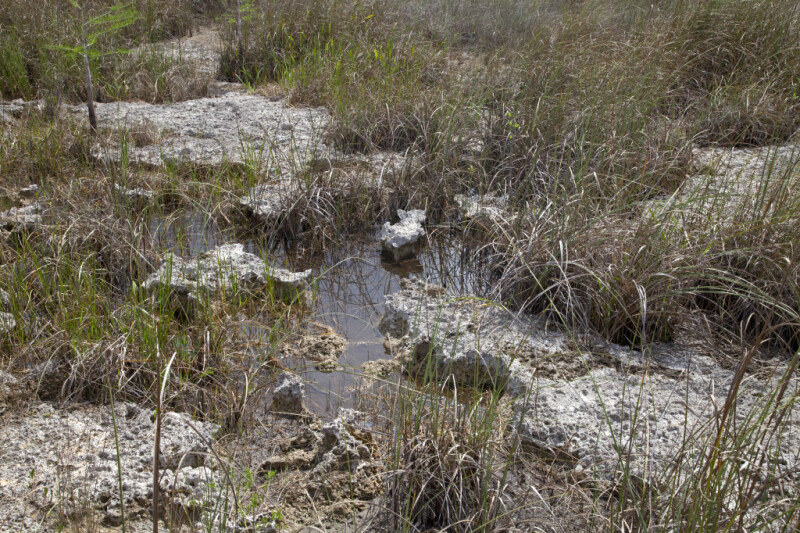 Grass, Rocks, and Water at Pa-hay-okee Overlook of Everglades National Park