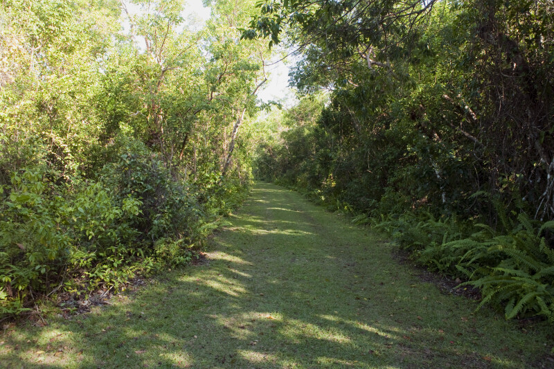 Grass Trail with Ferns, Shrubs, & Trees