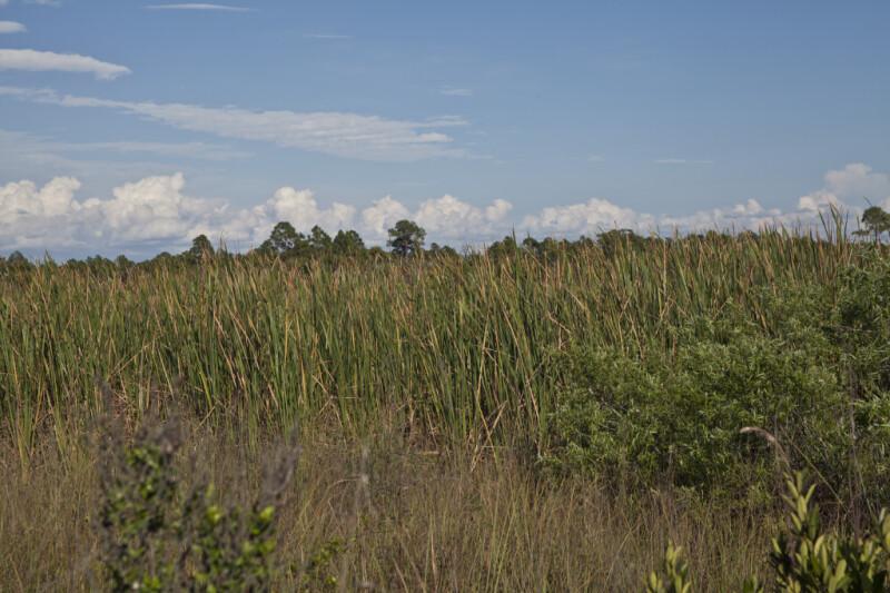 Grasses and Low-Lying Shrubs along Birdon Road