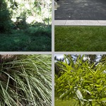 Grasses photographs