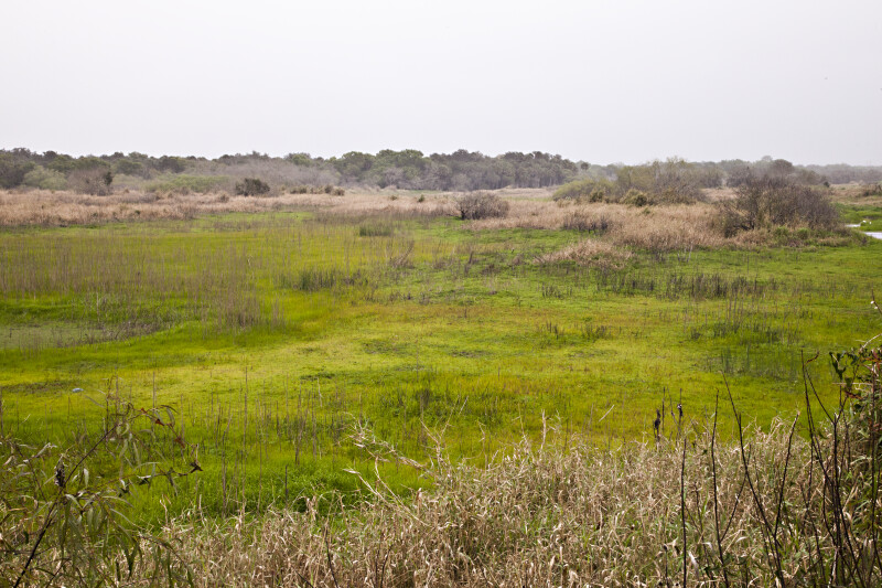 Grassy Area With Scattered Plants at Myakka River State Park