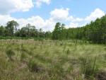 Grassy Coastal Prairie