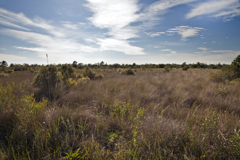 Grassy Field at the Big Cypress National Preserve