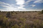Grassy Field at the Big Cypress National Preserve