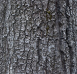 Gray, Scaly Tree Bark