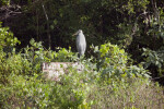 Great Blue Heron on Sign