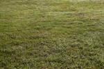 Green Grass at Boyce Park