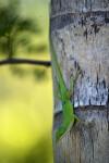 Green Lizard Close-Up