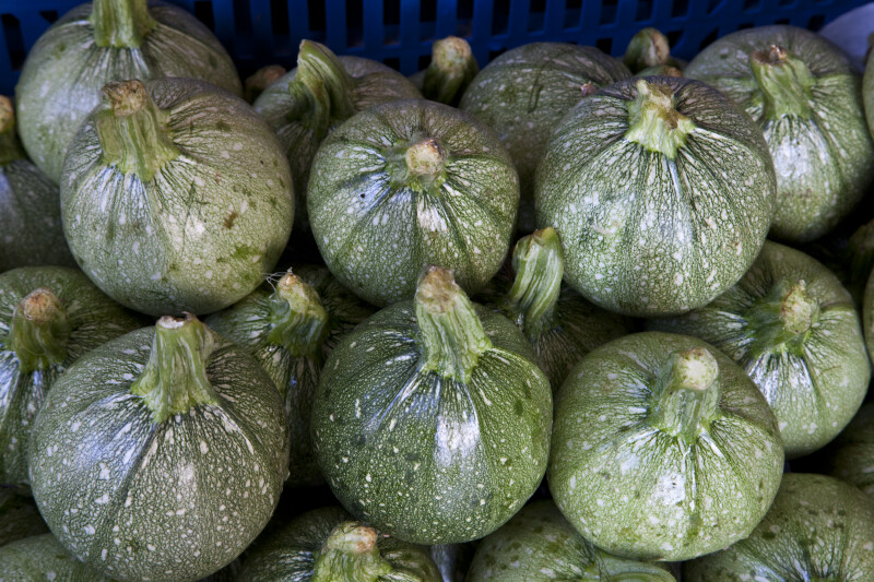 Green, Rounded Squash